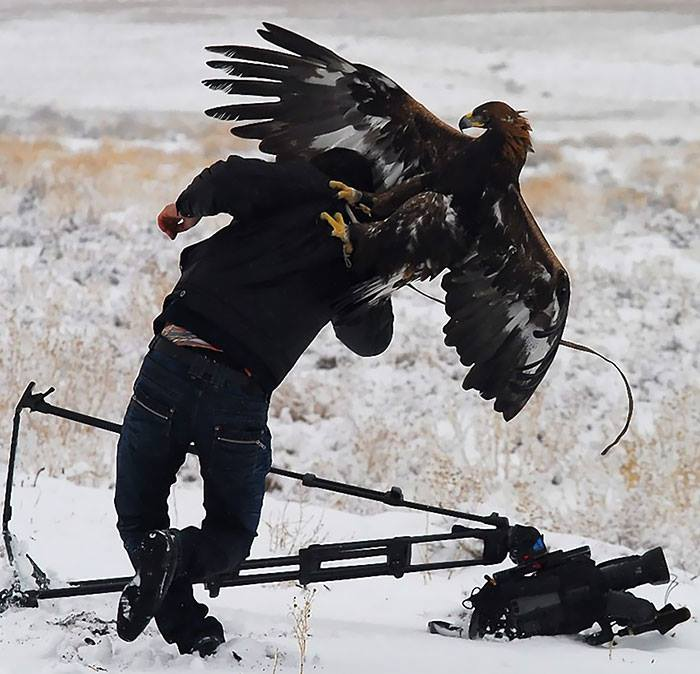 Big Eagle Attacking While Taking Picture