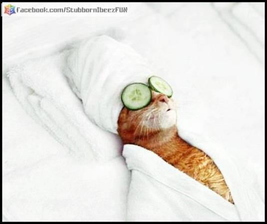 Beutiful cat