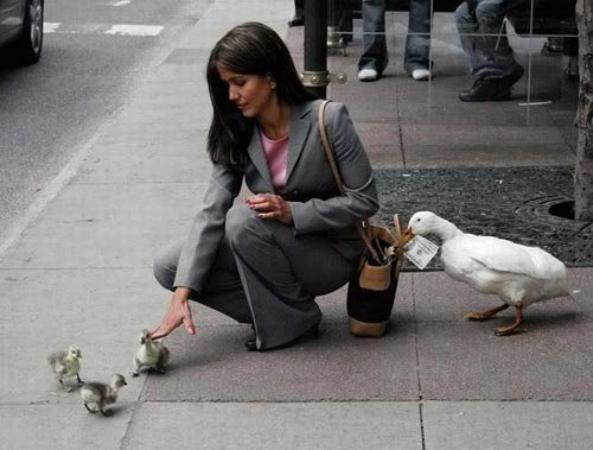Pickpocket Duck