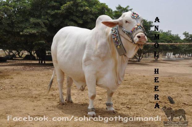 Anmol Heera