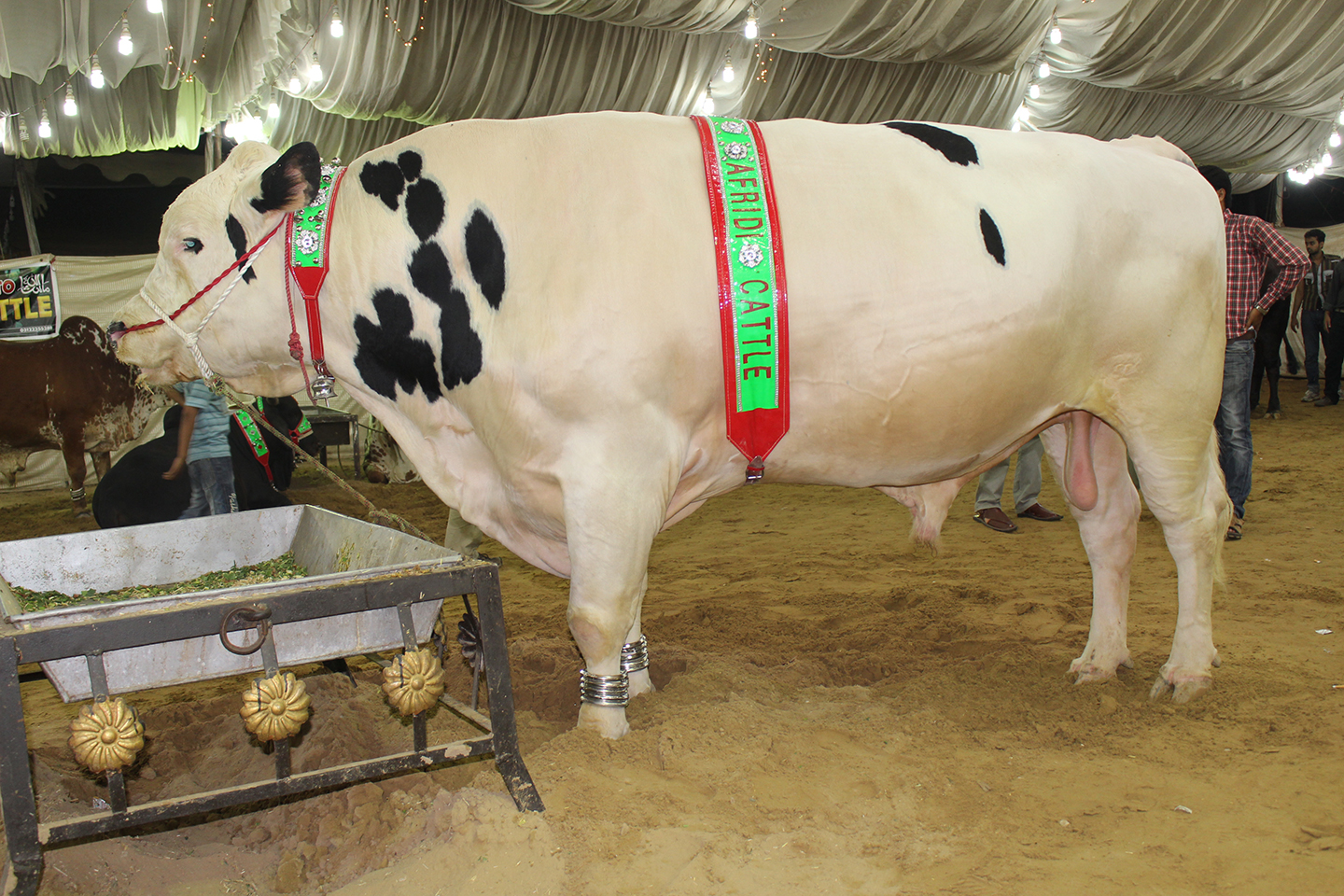 National Day Of Reconciliation ⁓ The Fastest Cow Mandi