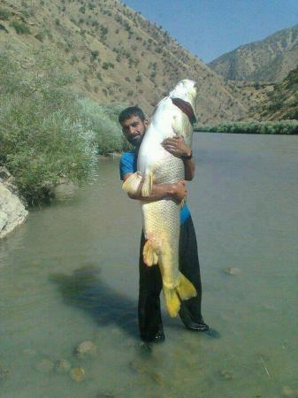 Human Size fish caught in Gilgit Baltistan, Pakistan