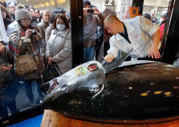 In Japan, 222-pound tuna sold for $ 1.8 million