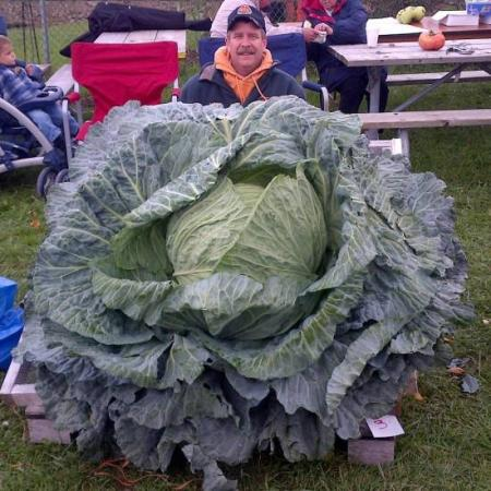 Newest Canadian record cabbage