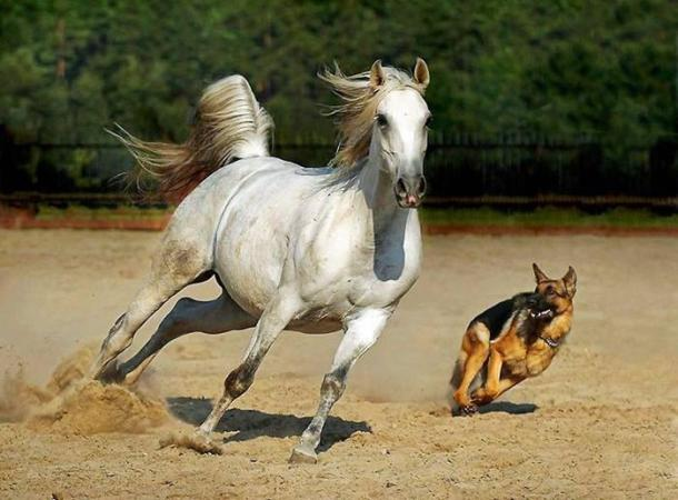 Amazing Horse and Dog Racing