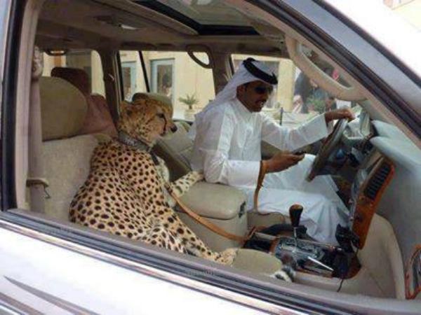 Arab's Pets