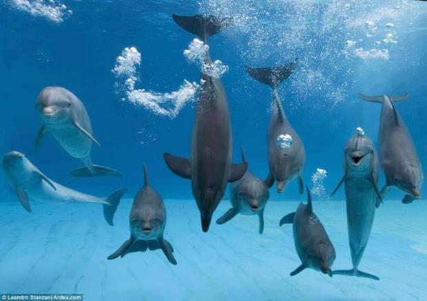 Dolphins in fun mood