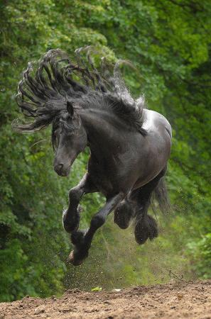 This horse has rocking hair. Awesome