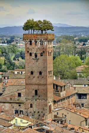 The Guinigi Tower - Lucca, Tuscany, Italy.