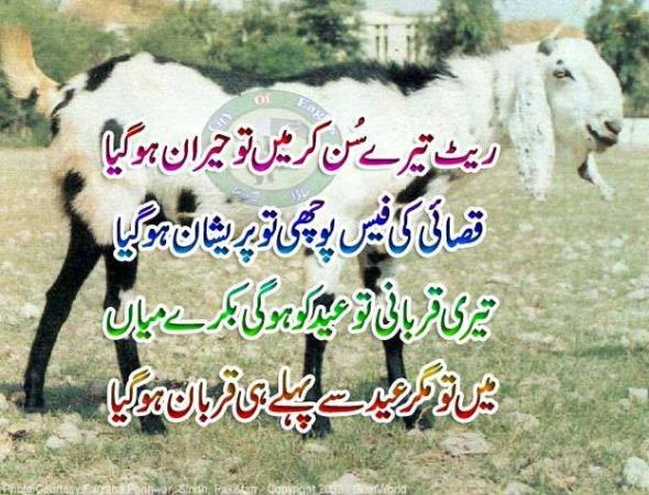 Bakra Eid Funny