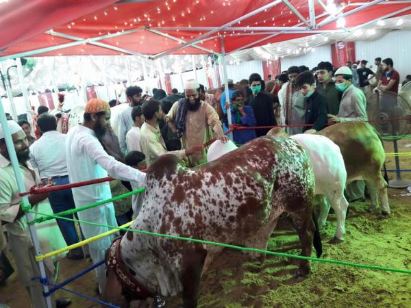 Surmawala Cattle Farm 2016