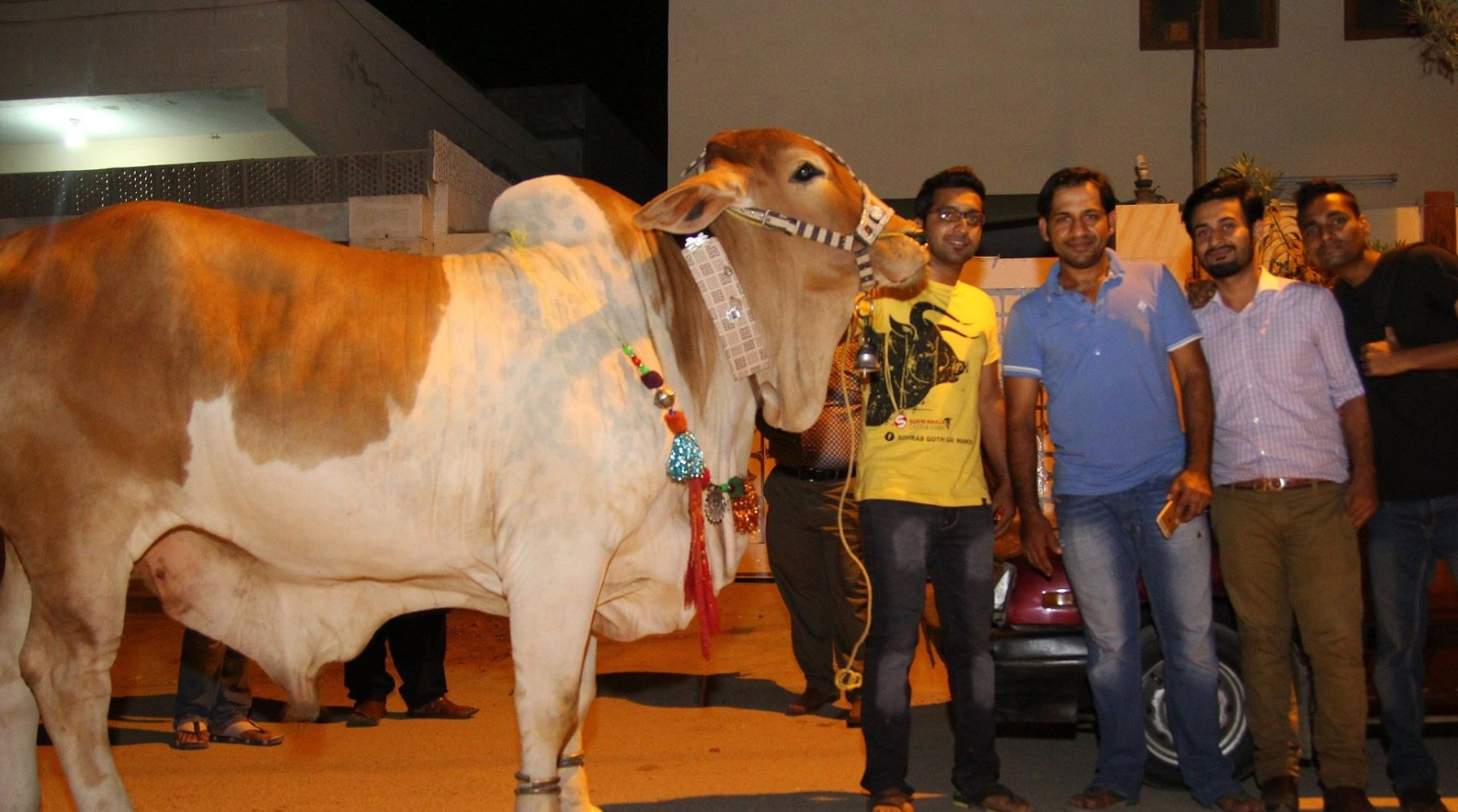 Sarfaraz‬ ‎Ahmed‬ With His Bull