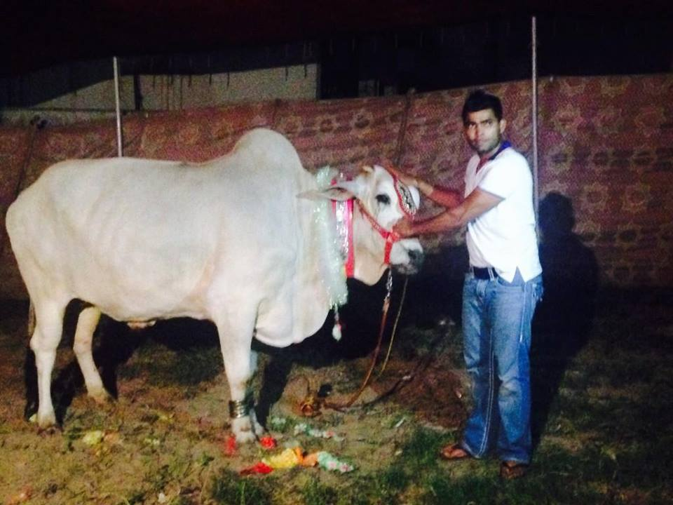 Umar Akmal With His Cow