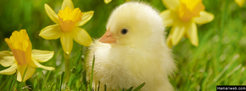 Cute Chicks Fb Cover