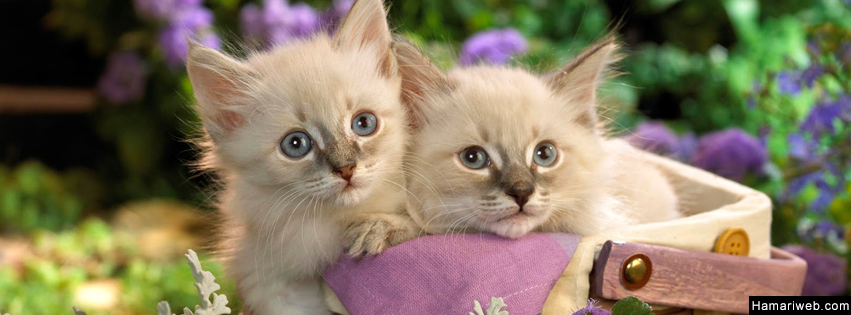 Cute Kitten Facebook Cover