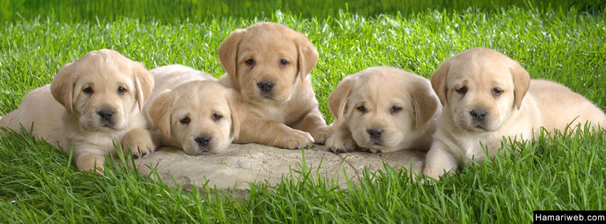 Cute Puppies Facebook Cover