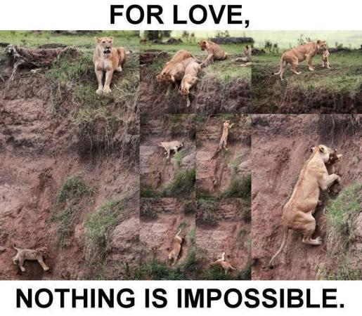 for Love, Nothing is Impossibible