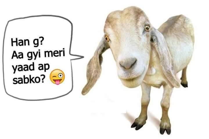 Agyi Meri Yad Sub Ko