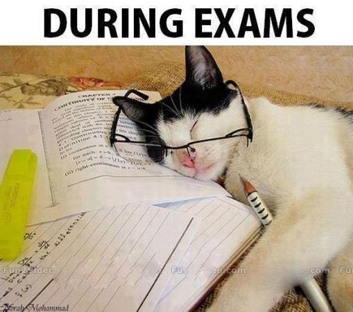 during exams   funny images amp photos