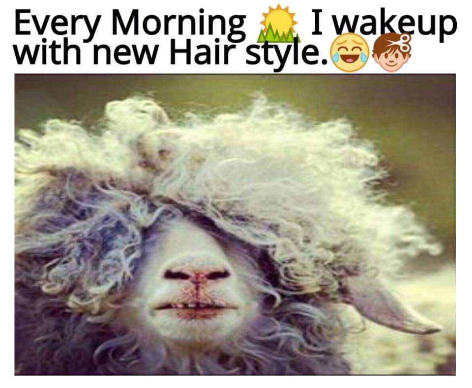 Every Morning I Wake Up With New Hair Style - Funny Images