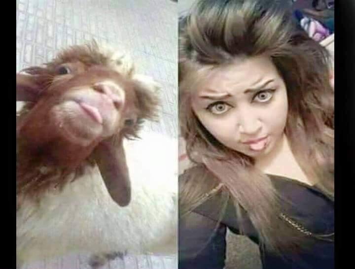 Girl Vs Goat