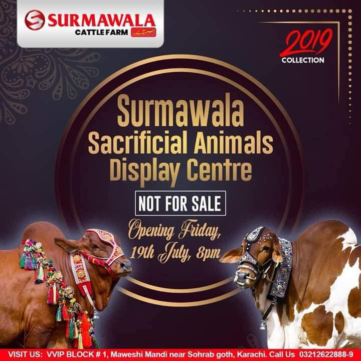 Surmawala Cattle Farm 2019