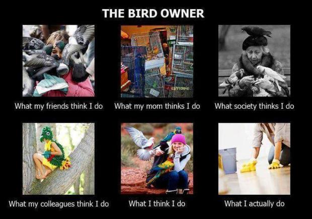 The Birds Owner