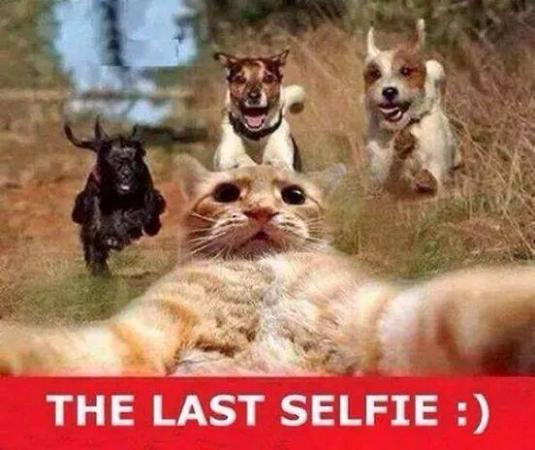 The Last Selfies Funny Pic