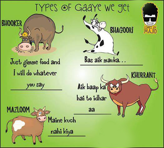 The Types Of Cows We Get