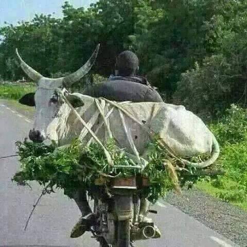 Wah G Kamal Hai