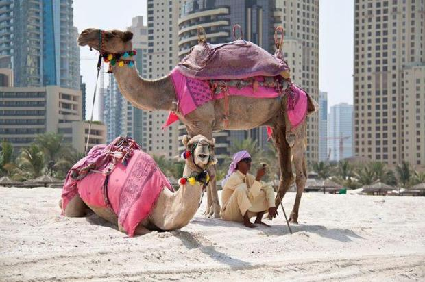 Camel Ride in Arab