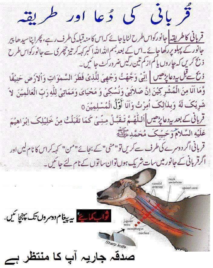 Qurbani Ki Dua Aur Tareeqa