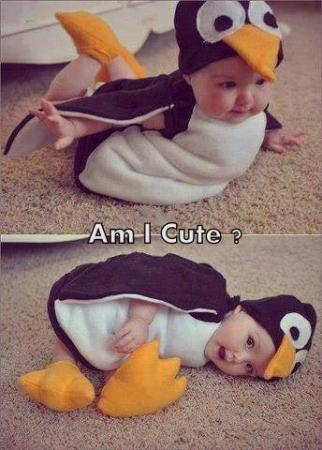 Cutest Penguin Ever