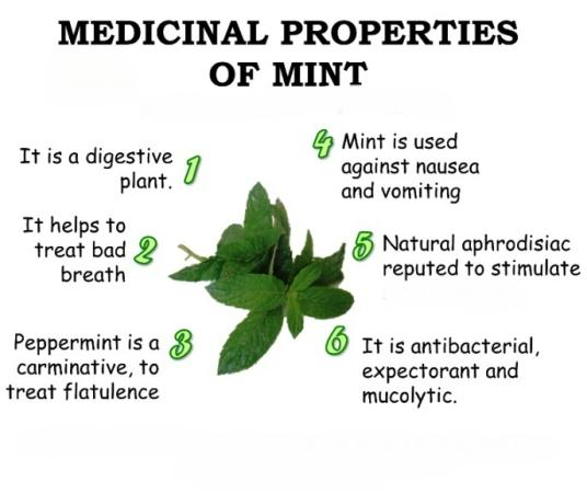 Medicinal Properties Of Mint