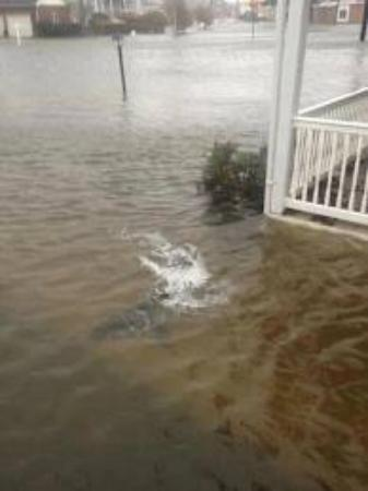Shark of Hurricane Sandy in New Jersey