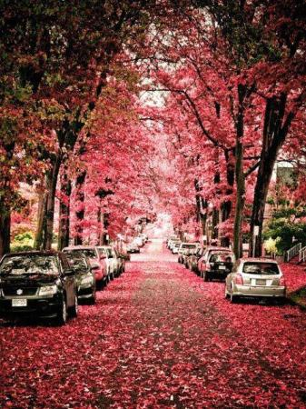 Amazing Red Colored Street
