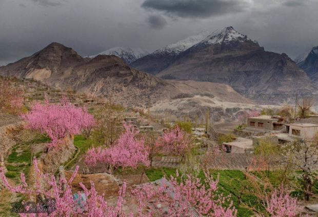 Blossom in Hunza Valley - Pakistan