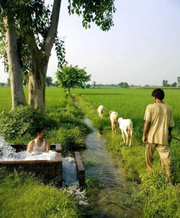 Life in Pakistan Village
