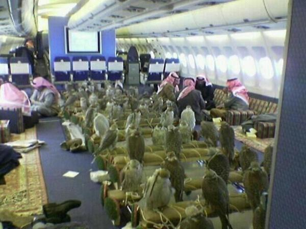 Arabs & their Falcons on a plane