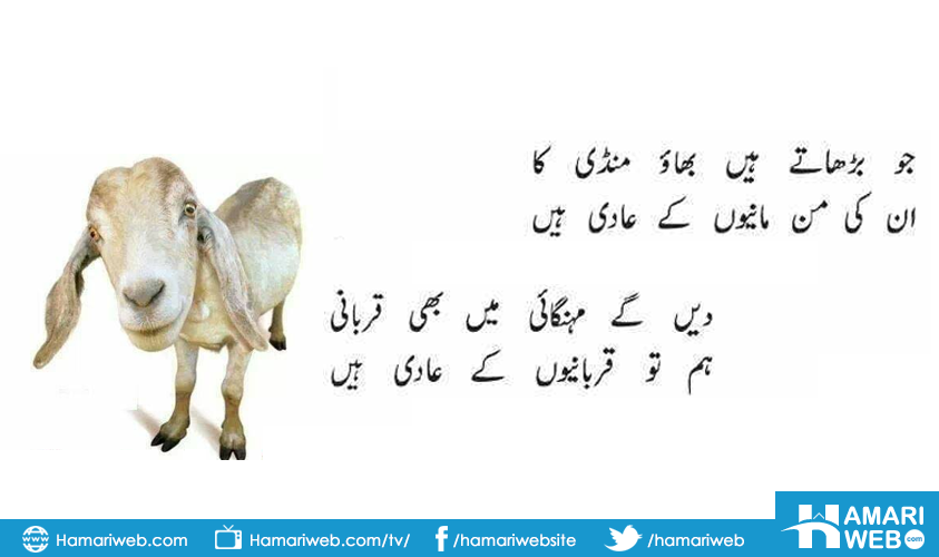 Eid Al Adha Funny Poetry - Poetry Images & Photos